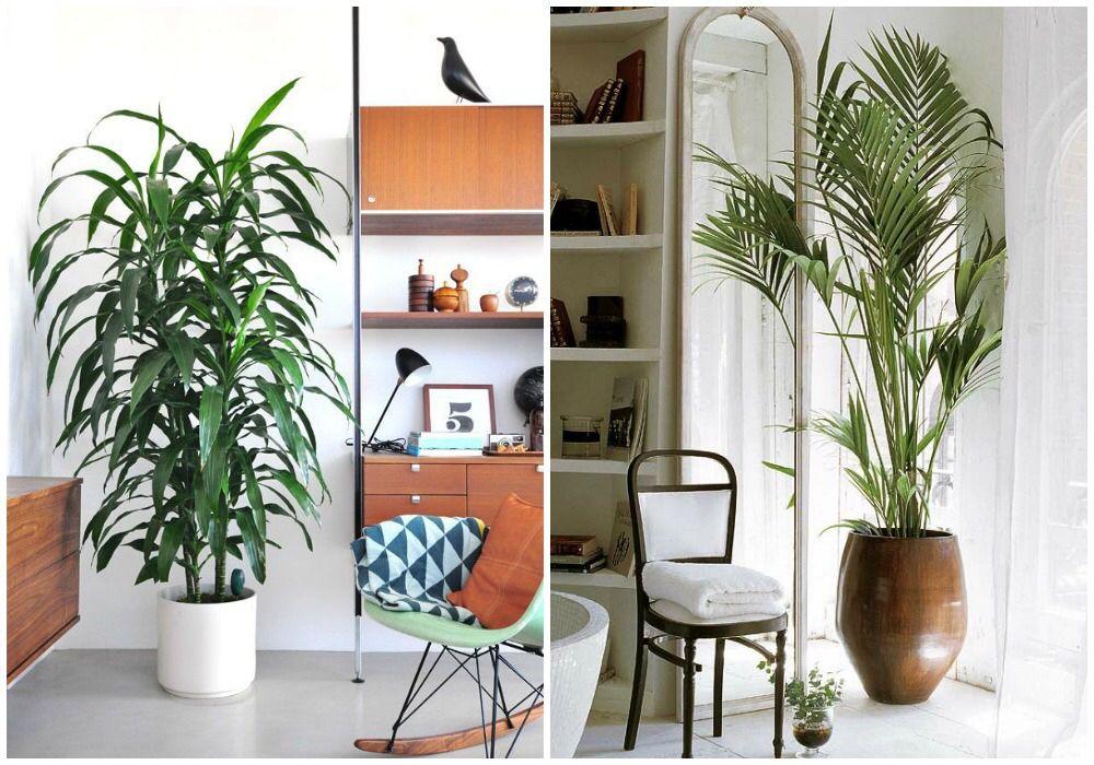 Plantas interior grandes jard n y plantas de interior - Plantas interior grandes ...