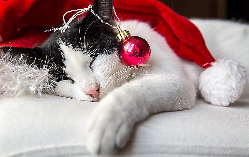 Get Christmas Gifts For Your Loyal Friends At Petsmart At Reasonable Price By Using Coupon Codes And Deals On Http Coupon4all Com With Images Animals Pet Gifts Pet Care