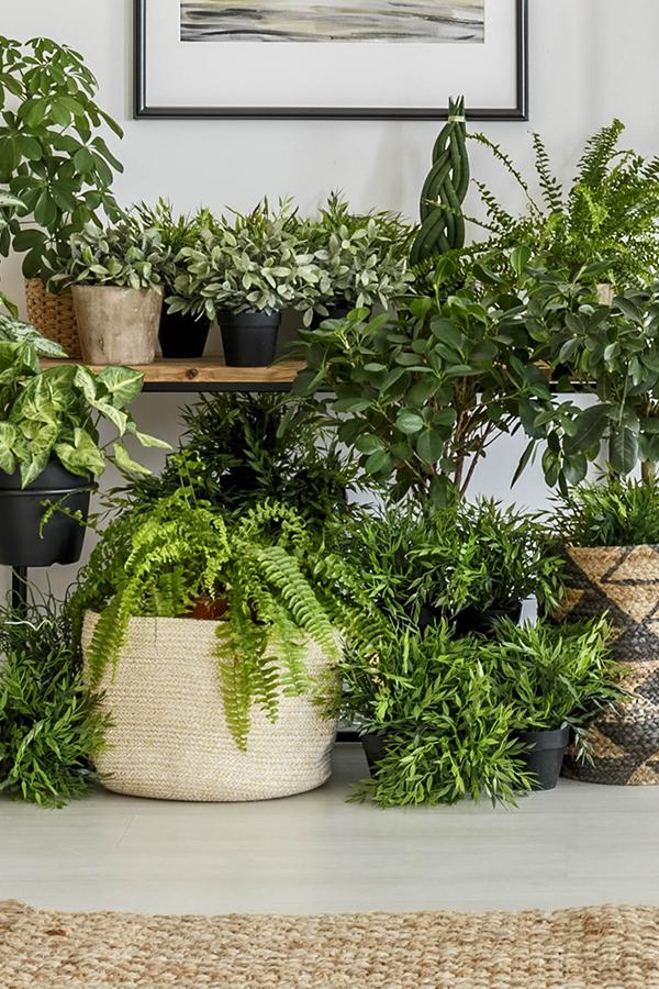 Urban Jungle Grun Und Zimmerpflanzen Fur Dein Dschungel Zuhause Pflanzen Zimmerpflanzen Grunpflanzen