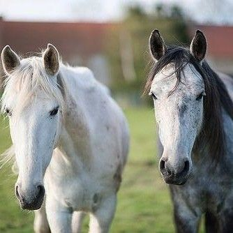 Pin By Nan Barber On Horses Horses Pretty Horses Horse Photography