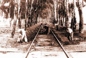 El Tren Que Unía Huelva Con La Punta Del Sebo Una Imagen Para El Recuerdo Fotos Antiguas Tren Medios De Transporte