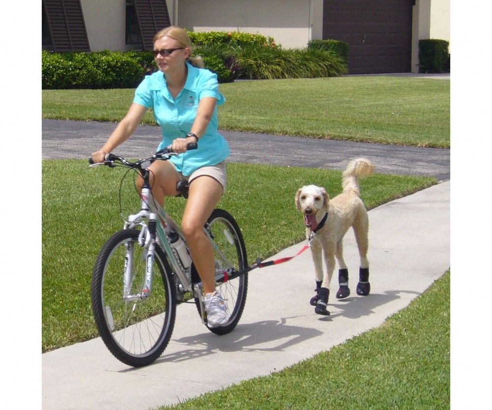 Bicycle Leash For Dogs K9 Cruiser Ride Your Bike With Your Dog