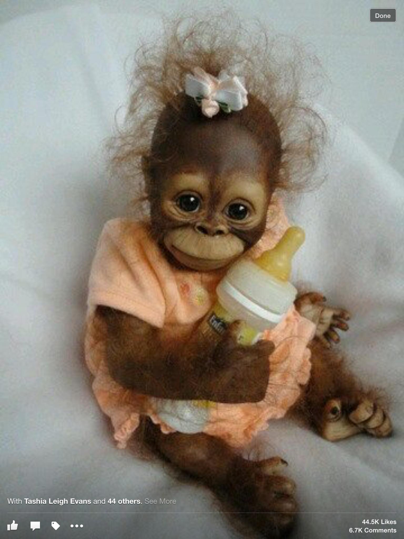 Baby orangutan in an orange dress. Such a cutie!