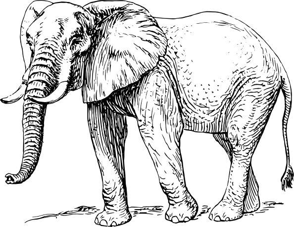Elephant Drawing Black And White