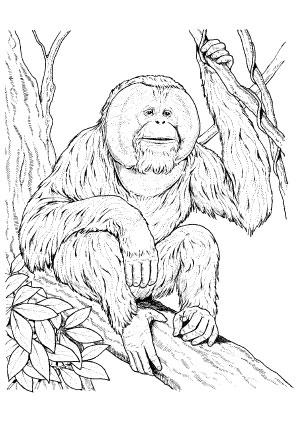 Ausmalbild Affe 2 Zum Kostenlosen Ausdrucken Und Ausmalen Ausmalbilder Ausmalbilderaffe Malvorlagen Ausmale Ausmalbilder Malvorlagen Tiere Ausmalen