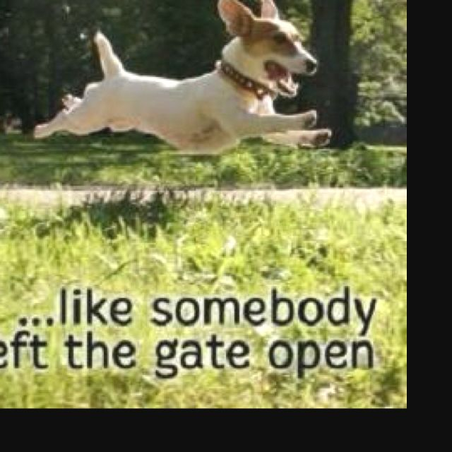 LIVE--like Somebody Left The Gate Open!