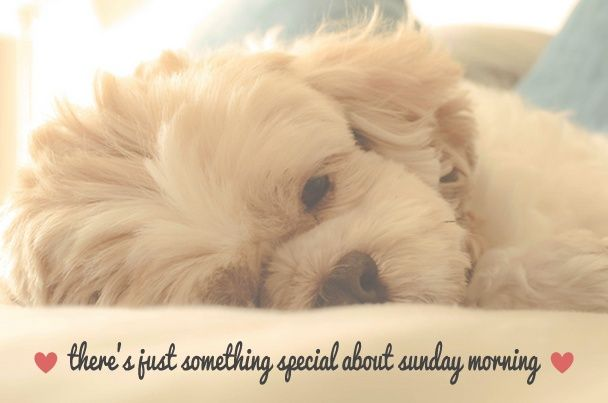 Sunday Morning Quote With Relaxed Fluffy Puppy
