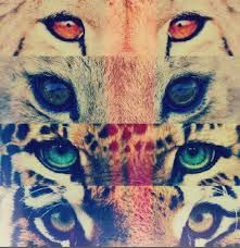 Imagenes Hipster Tumblr Animales Buscar Con Google My Mind