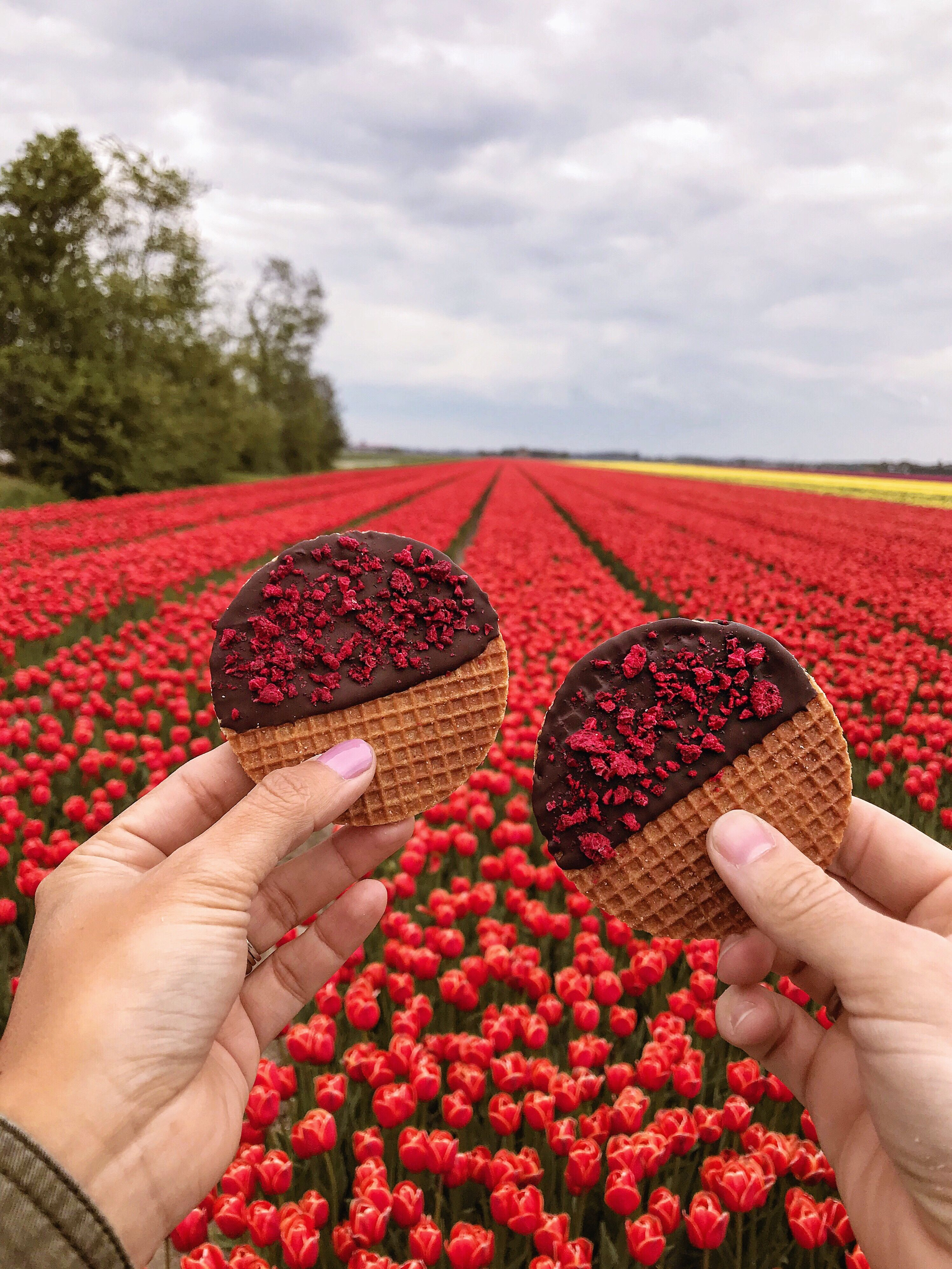 It S Only Since I Moved To The Netherlands That I Get So Excited About Spring I Ve Always Liked Spring It S Warmer And It Me Tulip Fields Tulips Tulip Season