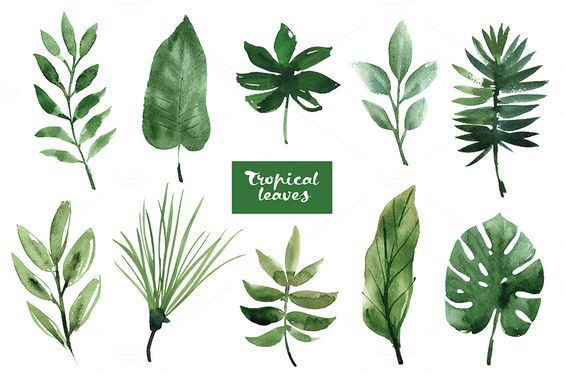 Watercolor Tropical Leaves Plant Painting Watercolor Plants