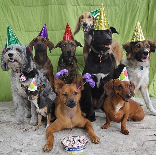 Los mejores tips para hacer una fiesta de cumpleaños para perros - Mujer de 10   Fiestas de cumpleaños para perros, Fiestas para perros, Perros