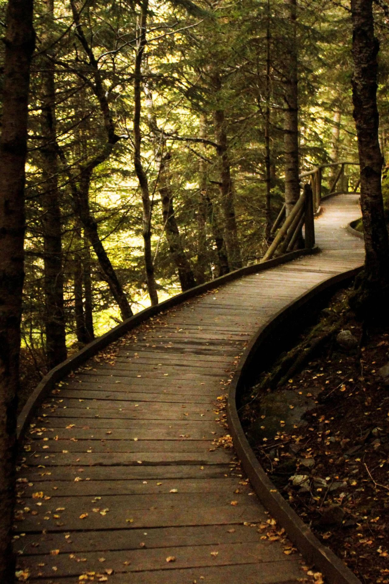 Pin by Gwen Marcy on forestcore   Nature aesthetic, Nature