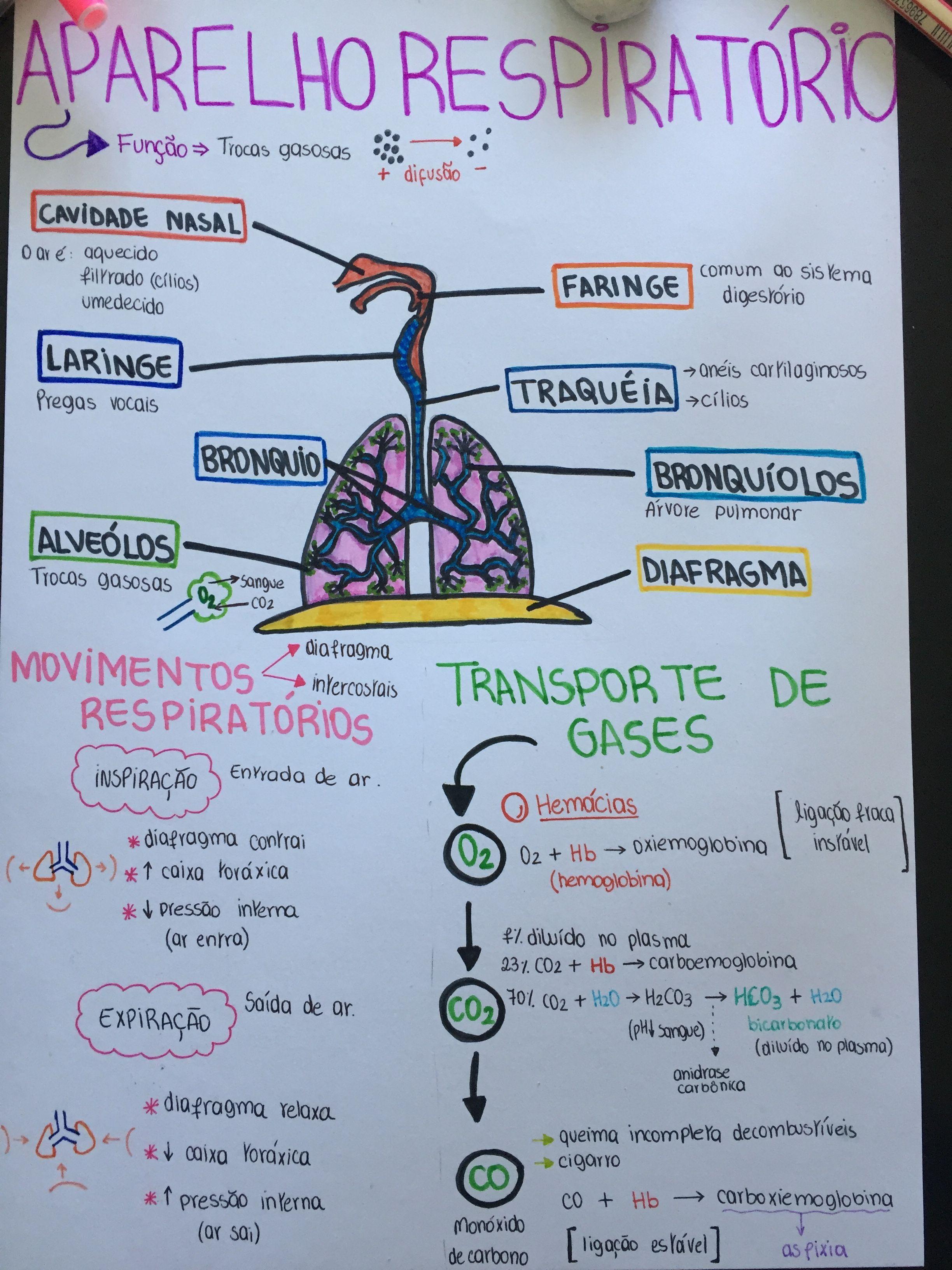 BIO - Aparelho Respiratório | Imprimir | Pinterest | Biología ...
