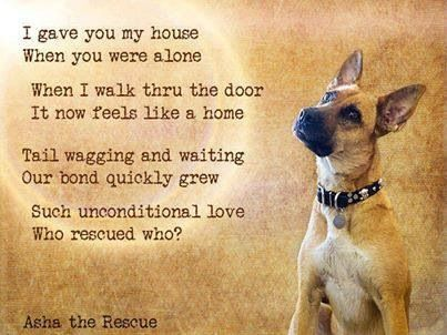 Who rescued who???  I know I was rescued by my two rescued dogs. They are my babies!