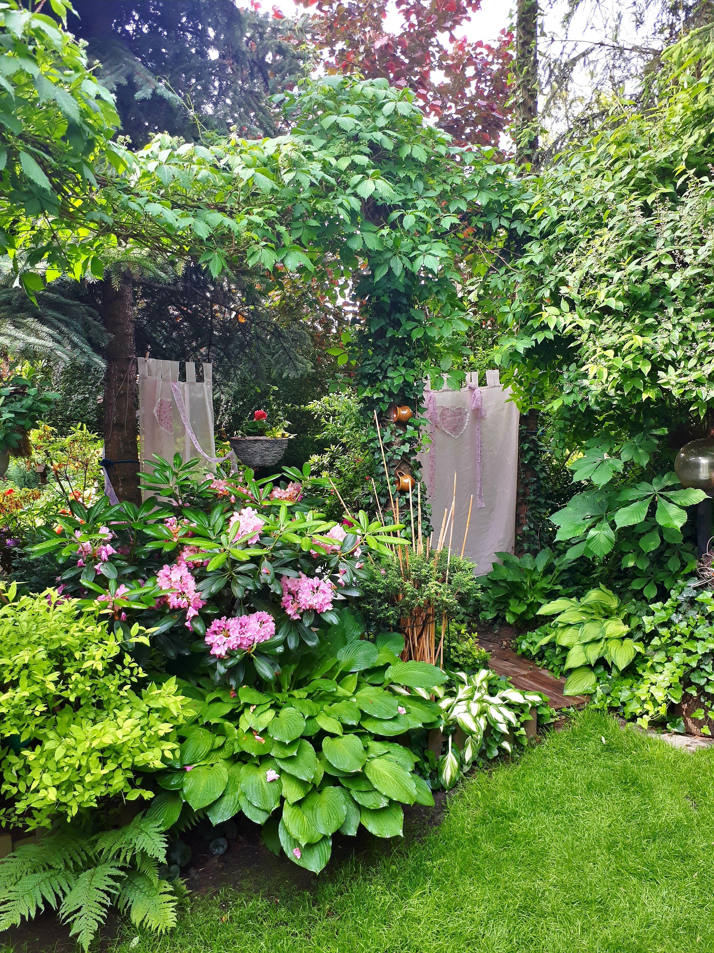 Piekny Nieco Tajemniczy Zakatek W Ogrodzie Fot Teresa Pluta Prawa Autorskie Do Zdjec Twojogrodek Pl Beautiful Gardens Garden Arch Garden