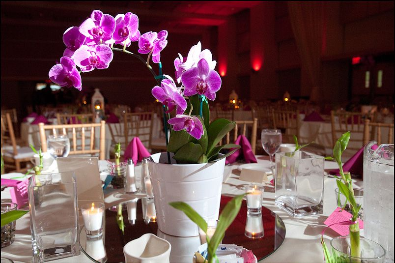 Orchid centerpiece on pinterest