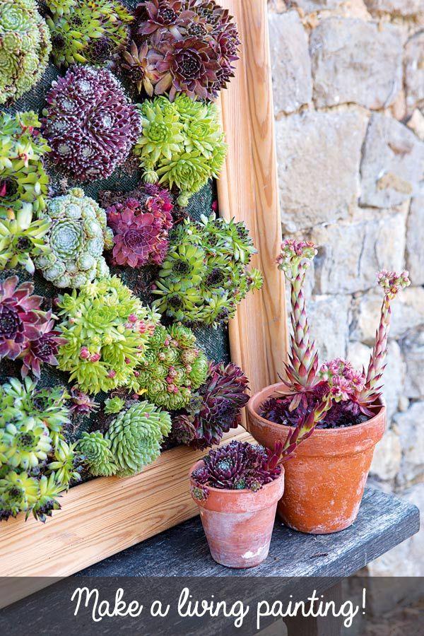Delightful DIY Succulent Wall Planters