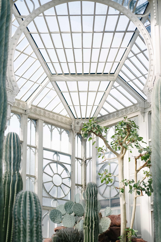 The Art of Watering Plants Plants, Indoor trees