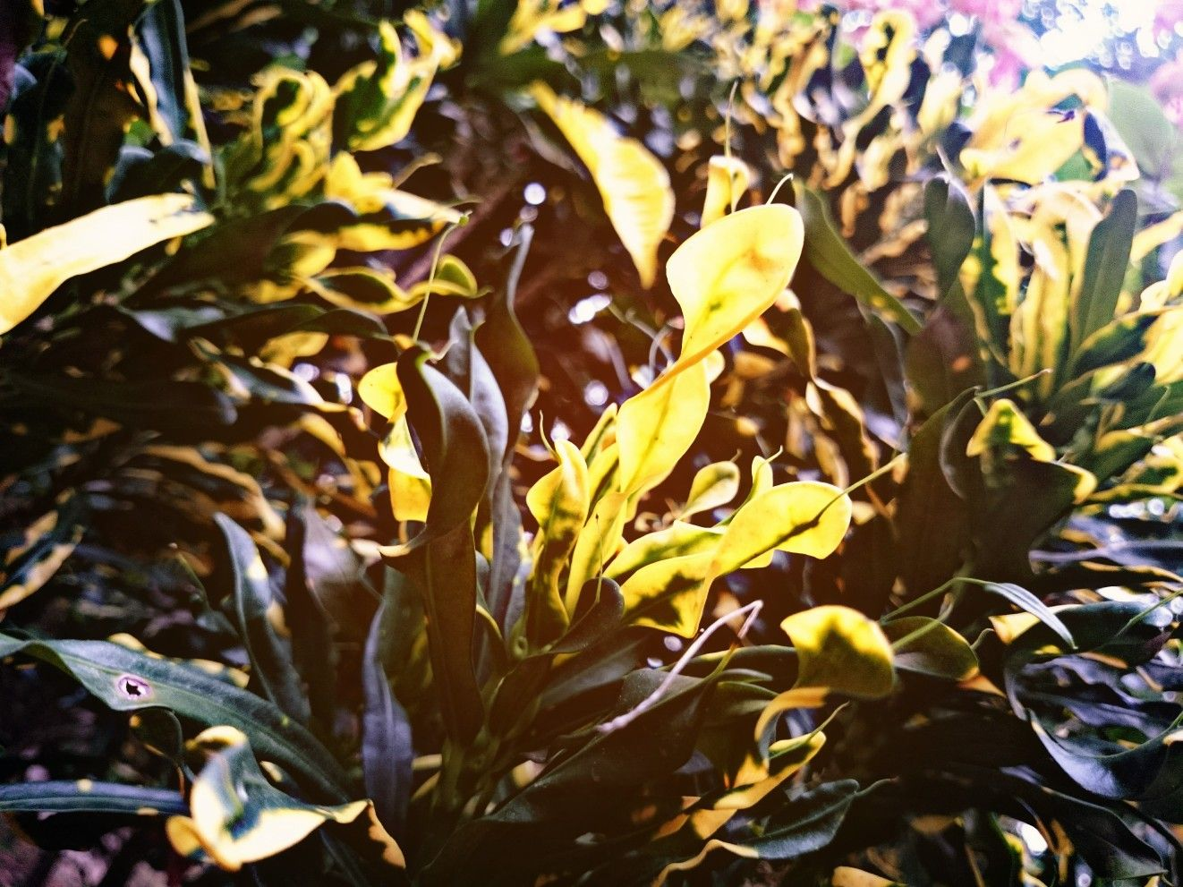 Pin by Rahul Dileep on cliCkz Plants