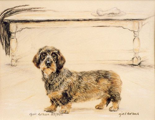 Dachshund Wire Haired Dog Limited Edition Print Artists Proof