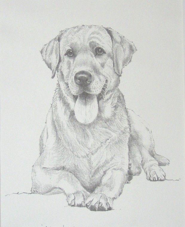 людей, картинки для рисования карандашом собак талии мужчин