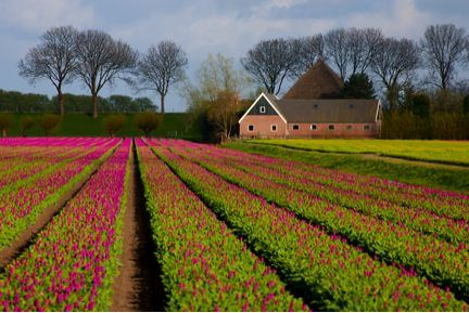 Sunny 16 rule - shoot at F 16 and match shutter speed to ISO (1/100 for ISO 100)
