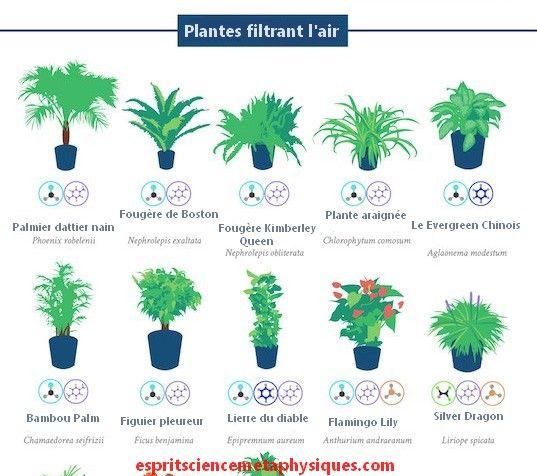 Top  Des Plantes DIntrieur Dpolluantes Qui Purifient LAir