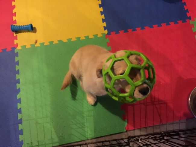 Funny Images Of Dogs In Trouble After Making Bad Choices