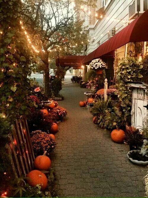 Gorgeous street decor in my home ...vancouver :-)