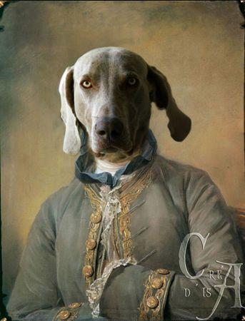 Weimaraner meowlogy.com   Animaux en costumes, Portraits de chiens, Chiens habillés