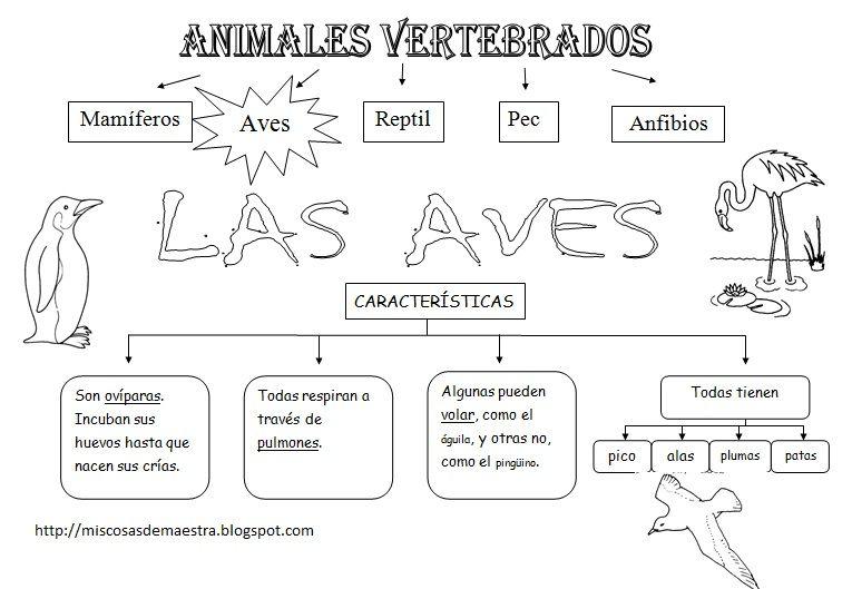 MIS COSAS DE MAESTRA*: Animales Vertebrados: Esquemas | Natural ...