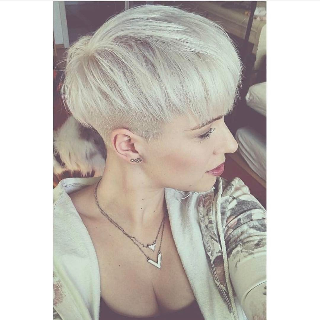 3,006 Likes, 12 Comments - @shorthair_love on Instagram ...