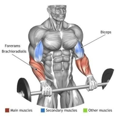 Forearm Exercises Forearm Workout Biceps Workout