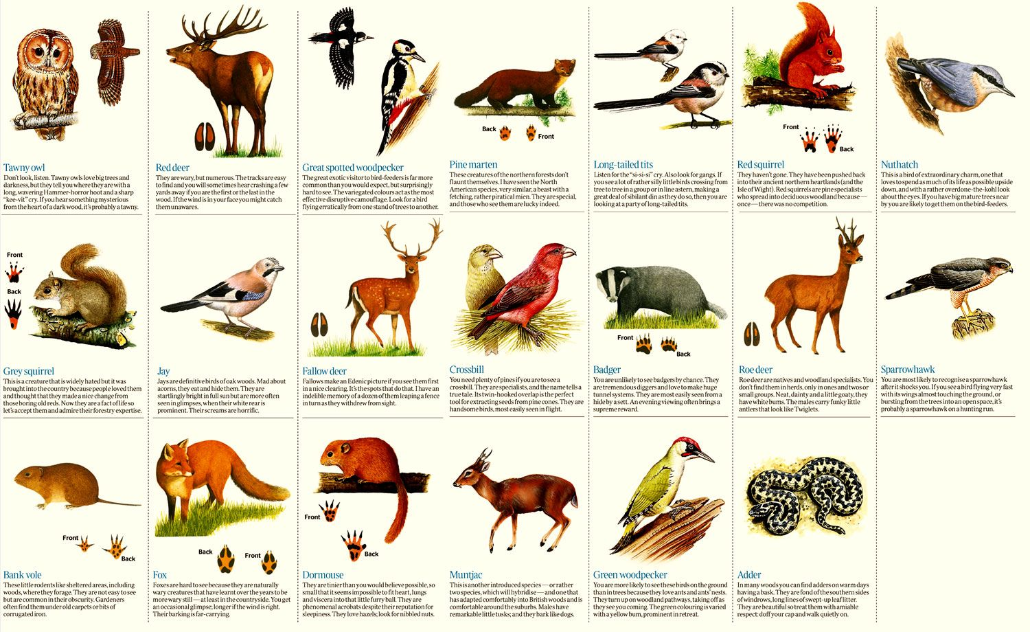 Woodland wildlife How to see the creatures through the