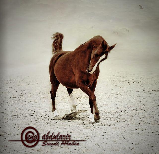 صور جميله صور جميلة Horses Horse Photos Equines