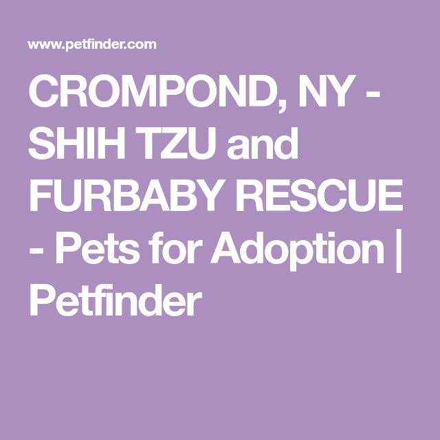 Get to know Shih Tzu and Furbaby Rescue | SHELTER LISTS