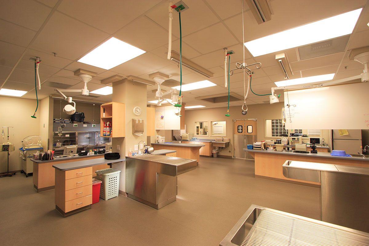 BDA Architecture Veterinary Hospitals General