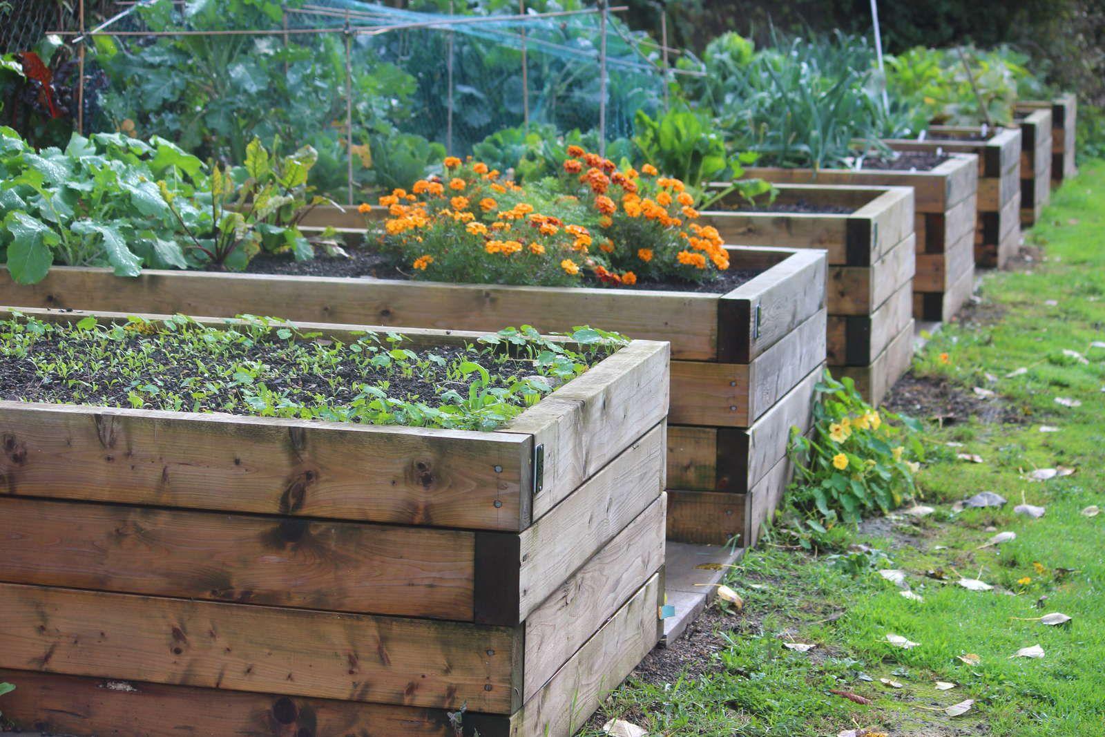 Hochbeet Selber Bauen Vs Hochbeet Kaufen Hochbeet Bepflanzen Hochbeet Und Pflanzplan