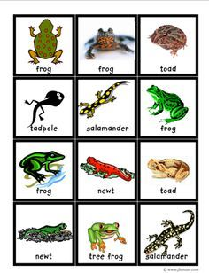 pre-k reptiles/amphibians on Pinterest | Reptiles ...