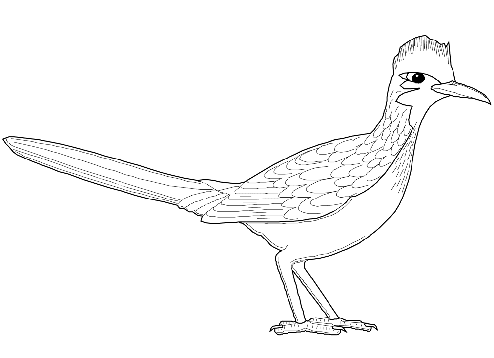 Roadrunner Coloring Page Coloring Pages Bird Coloring Pages Free Printable Coloring Pages