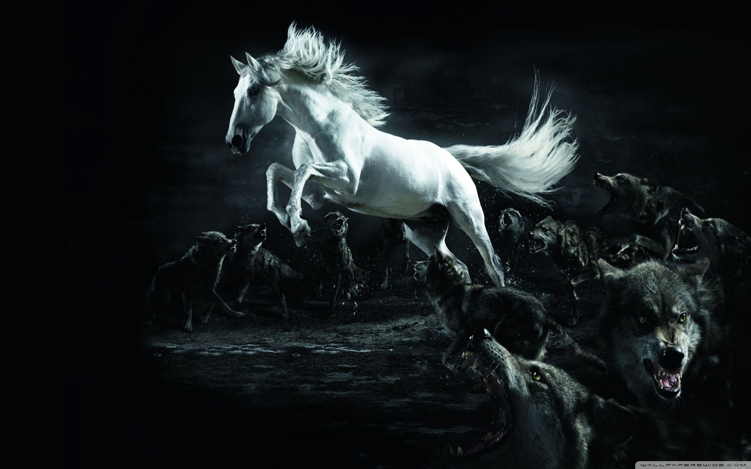 Caballos Horse Wallpaper Horses Horse Pictures