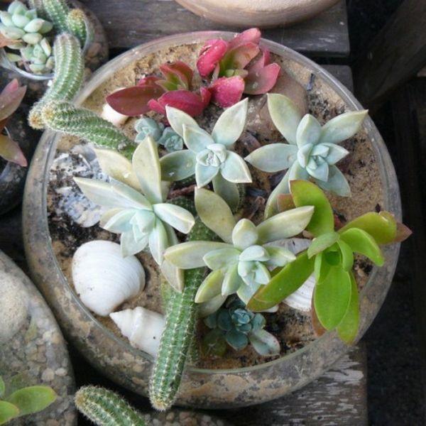 35 Wundervolle Deko Ideen Für Den Garten Mit Sukkulenten   #Gartengestaltung