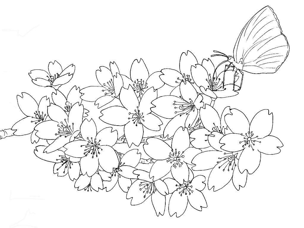 桜の花とモンキイチョウの下絵ーさくらの塗り絵 Coloring Pages