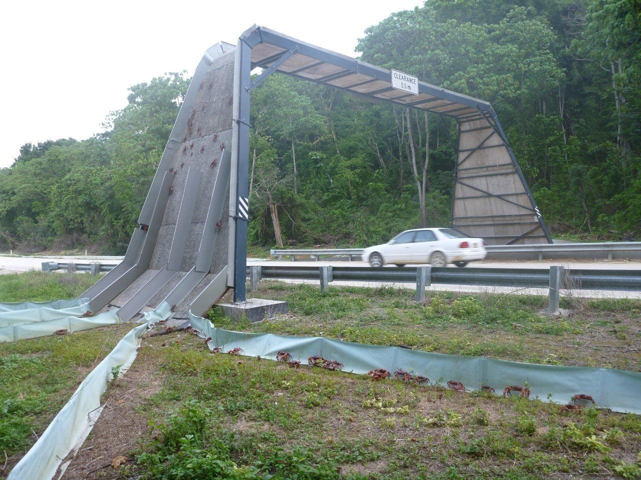 The Crab Bridge On Christmas Island Redcrabs Greatmigrations Christmasisland