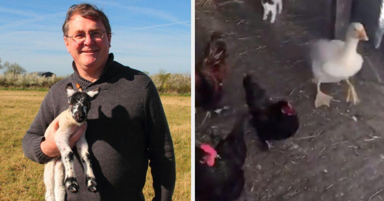 This british farmer didnt know his wholesome tiktok