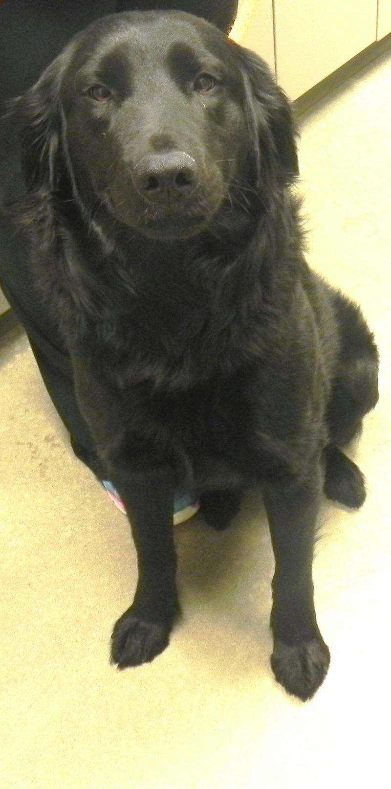 Adopt Tara on Petfinder Animal shelter, Animals, Save