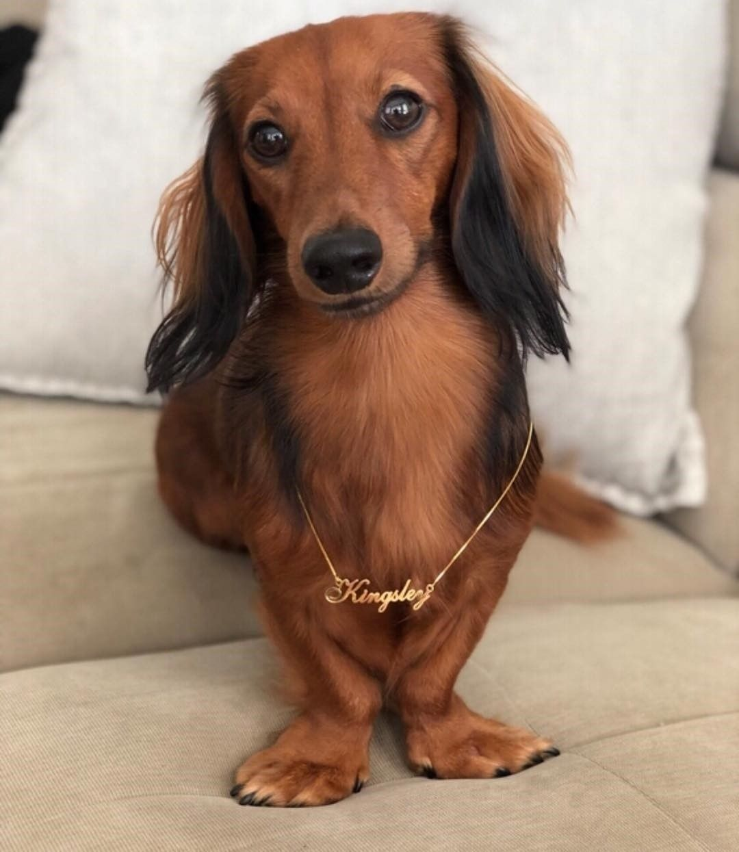 Pin By Danielle Marie On Adorable Doxies 3 Dachshund Dogs Puppies