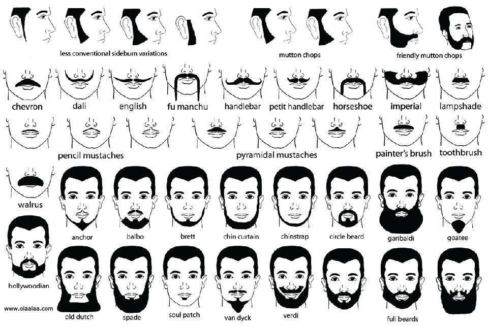Facial hair chart Beard no mustache, Mens facial hair