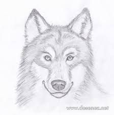 imagini pentru desene in creion cu animale simple