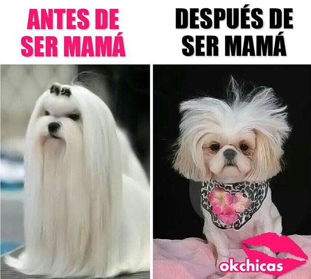 Que Bonita Es La Maternidad Memes Divertidos Imagenes Para Reirse Imagenes De Risa Memes
